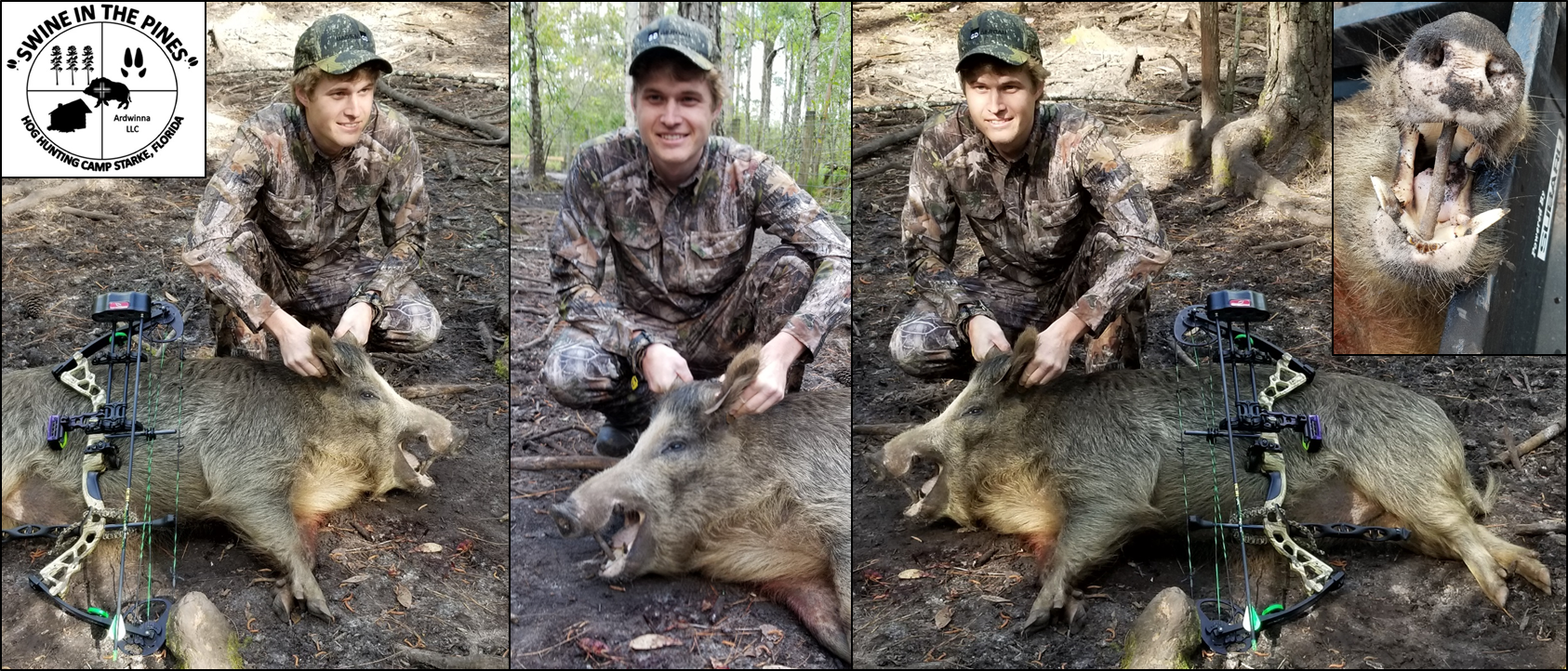 Andrew with this nice Wild Hog look at those cutters taken at Swine In The Pines Hog Hunting Camp in Northeast Florida