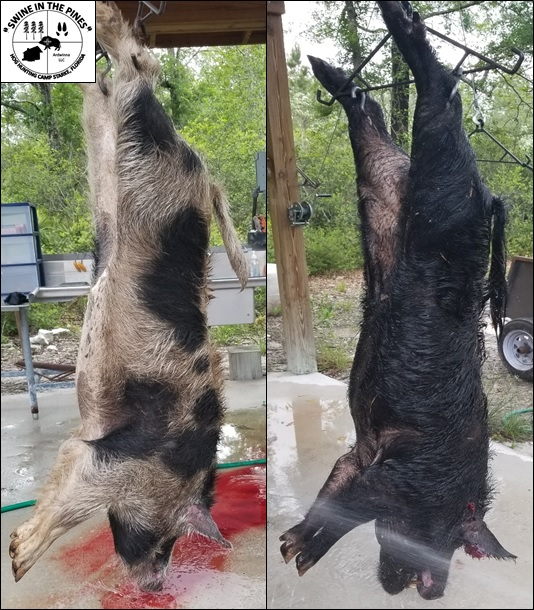 Jeff and Tyler shot some Big Boys at Swine In The Pines in North Florida