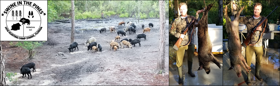 Ken with his nice 89/74lb Wild Boars taken at Swine In The Pines Hog Hunting Camp in North Florida