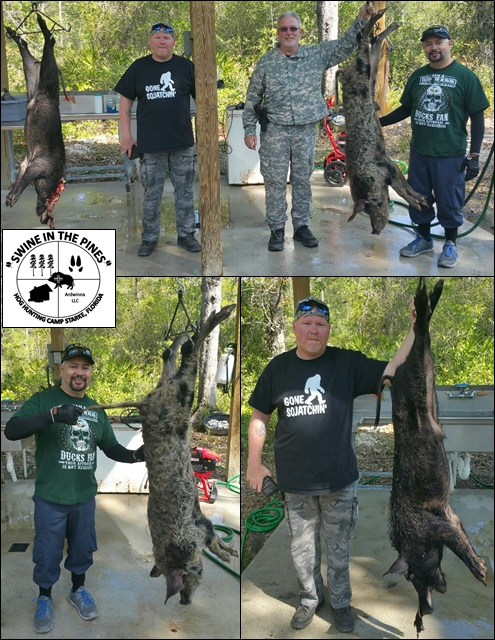 Kevin, Robert, and Steven took these nice Wild Boars at Swine In The Pines in Starke, Florida