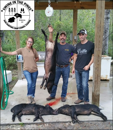105lb Sow, 78lb Boar, and 74lb Boar taken on a Guided Hunt at Swine In The Pines Northeast Florida Hog Hunting Camp