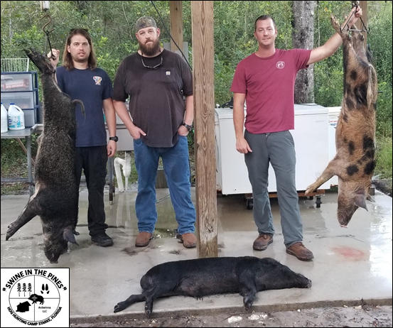 Philip, John, and Chris with their 114lb Boar, 90lb Boar, and 92lb Sow after a Guided Hog Hunt at Swine In The Pines in Starke, Florida