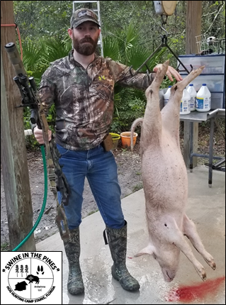 Robert harvested this nice 72lb Wild Sow from Swine In The Pines in Starke, Florida