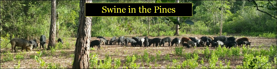 Discounted rates for veterans, first-responders, children, and groups at Swine In The Pines