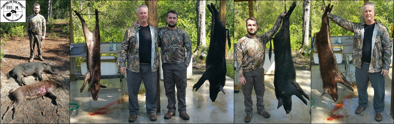 Tom and Eric took both these Wild Hogs at Swine In The Pines Hog Hunting Camp in Northeast Florida