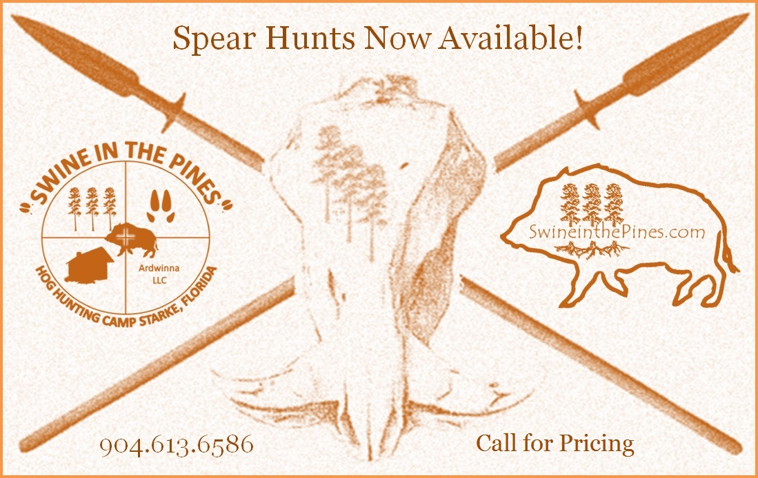 Spear Hunts at Swine In The Pines